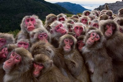 Salary-day-group-of-monkeys