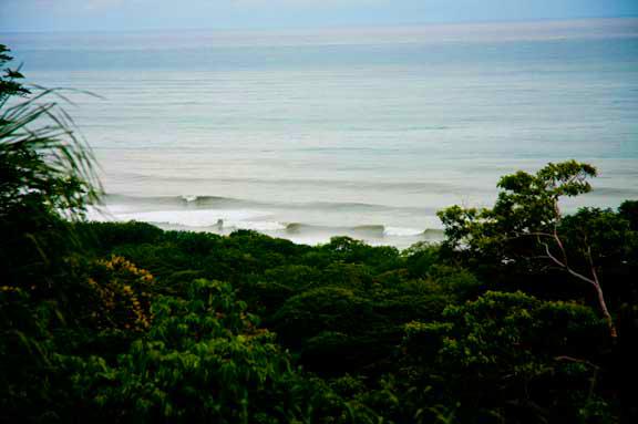 jungle-waves